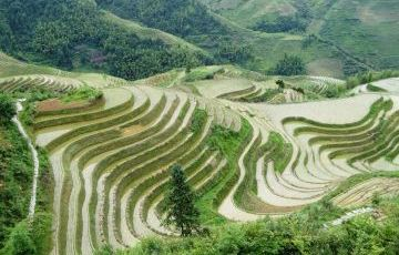 Guilin to Longsheng Rice Terrace One Day Private Tour