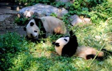 Beijing  Hutong, Panda House, Lama Temple and  Confucius Temple Private Day Tour