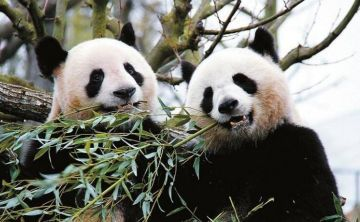 Beijing Hutong, Lama Temple, Panda House , Olympic Stadium and Jingshan Park Group Day Tour