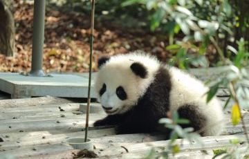 Chengdu 4 Days Prviate Package Tour (With Hotel)